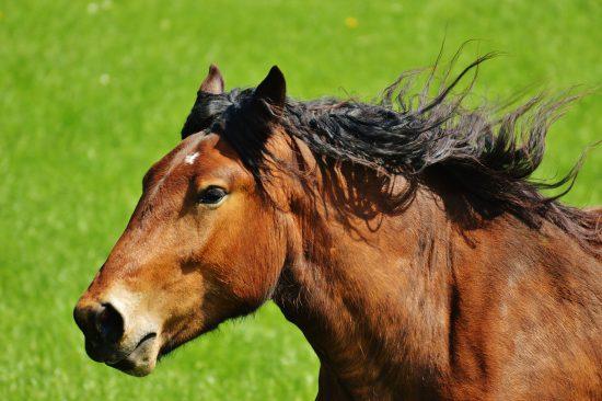 caballo-al-galope